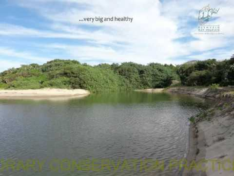 2014D4S33L1 Ayanda Mnikathi The first comprehensive mapping of micro-estuaries within KZN