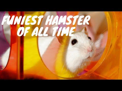 Funny Hamster Fails 2019 | Hamster Wheel Fail On Exercise Wheel