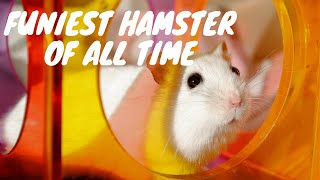 Funny Hamster Fails 2019 | Hamster Wheel Fail On Exercise Wheel