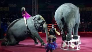Цирк! Шоу слонов великанов! Рекомендую