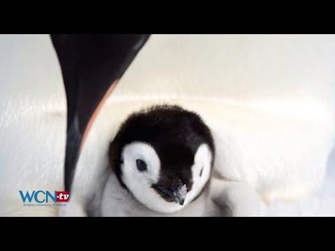 WCN-tv Earth Report: Climate Change Endangering Emperor Penguin, ENG