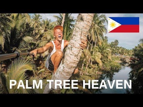 PALM TREE HEAVEN ON SIARGAO ISLAND, PHILIPPINES | VLOG 54