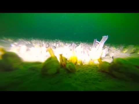 Keuka Lake Bottom @ 100 Feet Deep