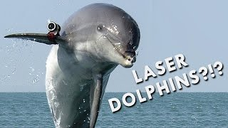 Download Dolphins with Guns on Their Heads Mp3 and Videos
