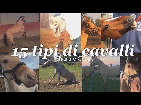 15 tipi di cavalli | Chiara e Cappu