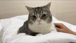 甘え足りないと夜中にお腹にマウンティングして起こしてくる猫がこちら…