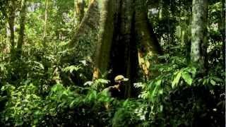 amazon rainforest paul rosolie