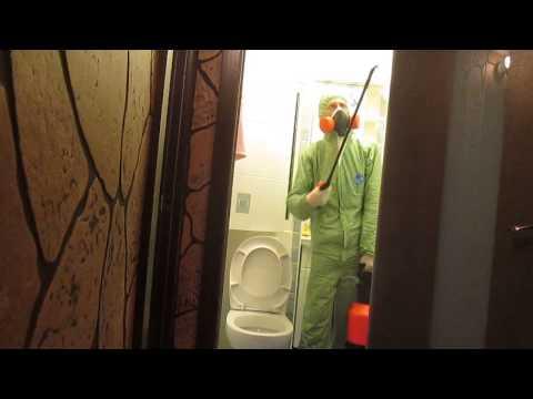 Как происходит уничтожение тараканов в квартире