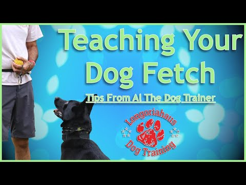 Teaching Your Dog Fetch- Tips from Al the Dog Trainer