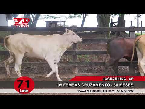 LOTE 071