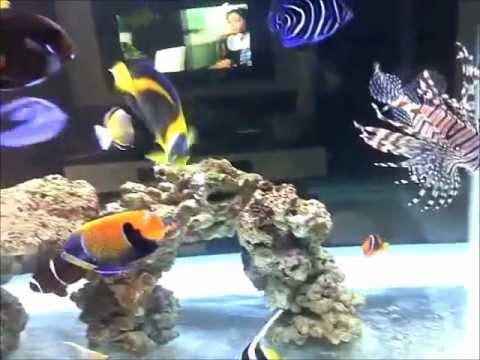 Saltwater Marine Aquarium Tank With Angels And Tangs At 6