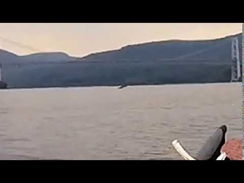 A massive fish was caught on camera in the Hudson River.