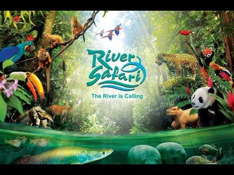 Video Tour of Singapore's River Safari (Giant Pandas, Amazon River Quest, Amazon Flooded Forest)