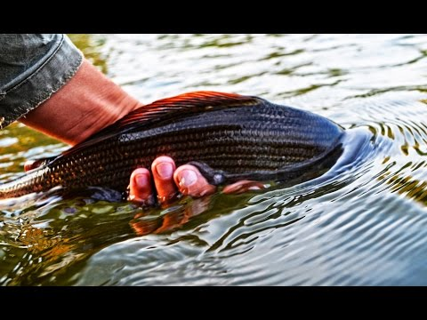 Slovakia - Fly fishing in Grayling Paradise