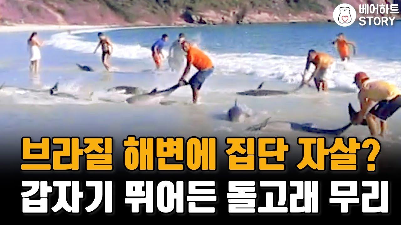 갑자기 해변에 뛰어든 돌고래 무리를 도와준 사람들