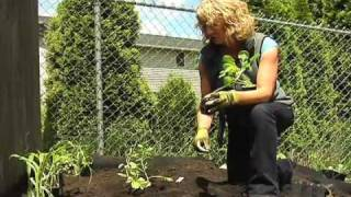 Planting Veggie Starts In A Raised Bed With Cedar Grove's Vegetable Garden Soil Mix.