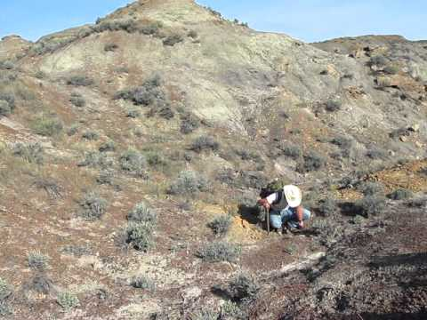 Looking for Triceratops in Montana