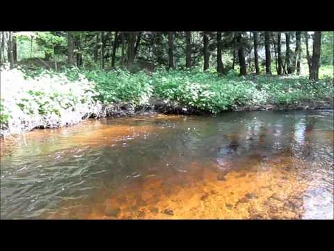 Antique Fly Fishing , for Brook Trout in MA.