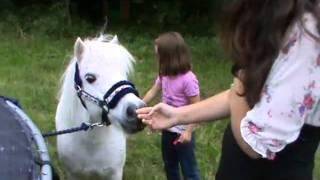 Nadias pony Felix