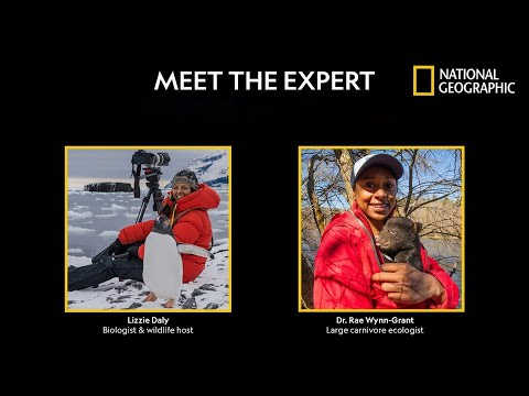 Face-to-Face with a Bear - Meet the Expert Live | National Geographic