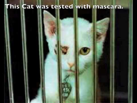 Animal Testing Commercial