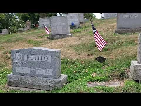 Download Frank Gorshins Grave