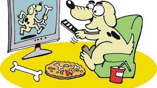 Чихуа хуа смотрит мультик про собаку! Так забавно!