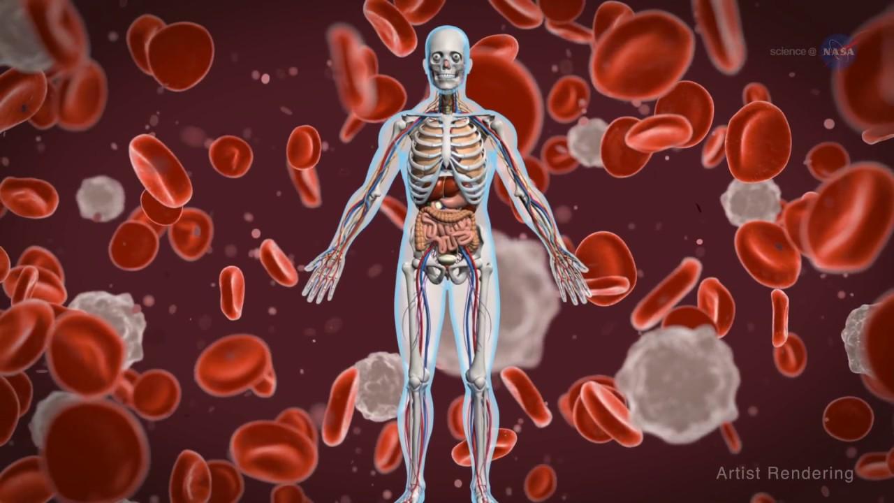 Studi Menemukan, Sistem Kekebalan Tubuh Dapat Dipicu Lebih Agresif Melawan Kanker