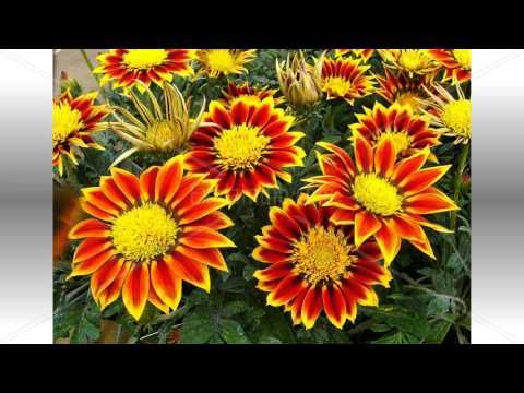 FLOWER IN SPRIHG
