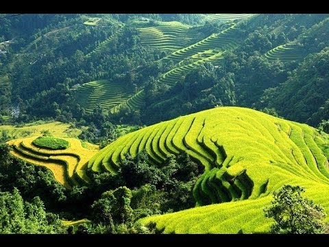 [Holidaytoindochina] Terraced rice fields in Sapa, Travel to Sapa, Best time to visit Sapa