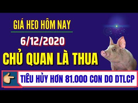 Giá heo hơi hôm nay ngày 6/12/2020 | Giá lợn hơi 3 miền Bắc Trung Nam lặng sóng và ít có biến động
