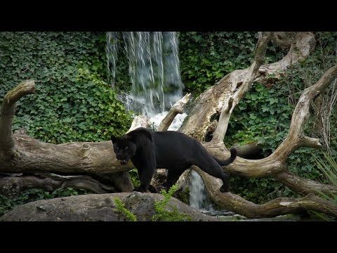 Chester Zoo Trip - (April 2017)