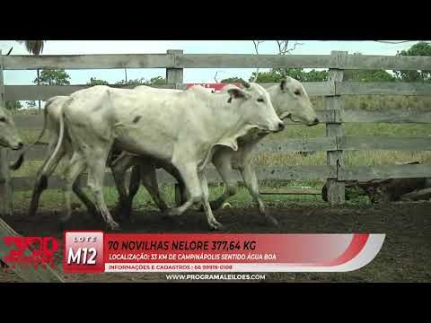 LOTE M12