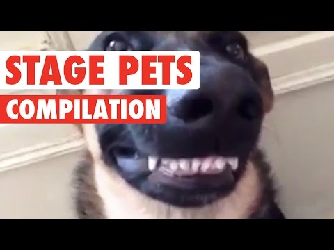 Stage Pets || Funny Pet Compilation