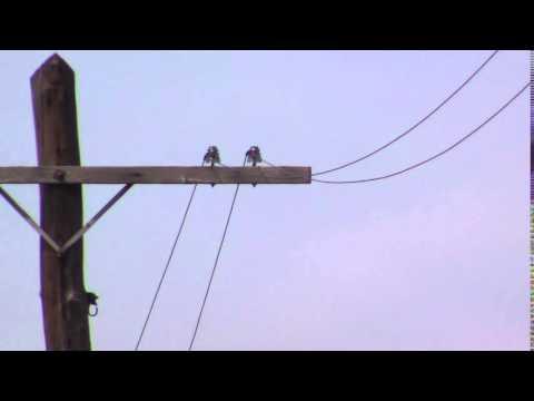 9 Seconds Of Random Telegraph Poles