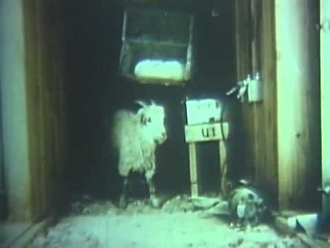 Chemical Warfare - Penetration of Fortified Targets by Sarin (GB),US Army Video