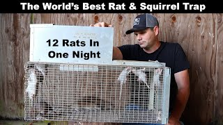 The World's Best Rat & Squirrel Trap. The Uhlik Repeater part 2 - Mousetrap Monday