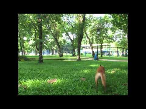 Ứng Dụng của tập tính động vật [Complete] - 11a1 Trấn Biên