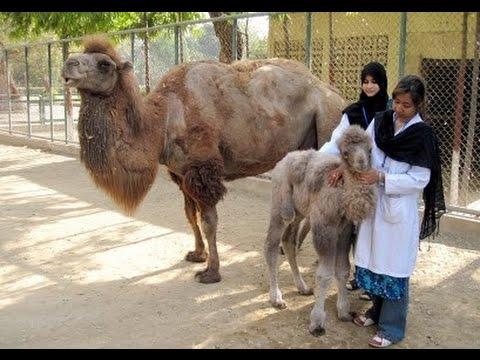 Karachi Zoo   YouTube
