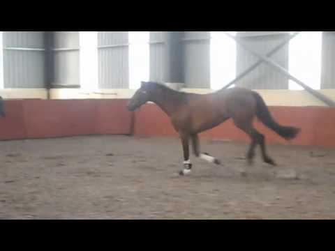Heathermore lux Roxy 3yo jump june 13