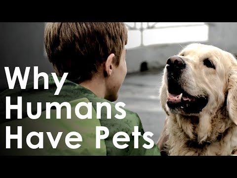 benefits having pets
