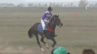Скачка Райкова 2016 (Лошади-Horse–Animal-racing-конь-смотреть-онлайн-скачки)