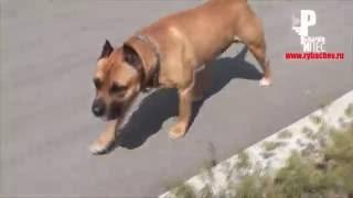 Дик любит щенков (маленькие подкидыши) [Рыбачёв и Пёс НЕИЗДАННОЕ]
