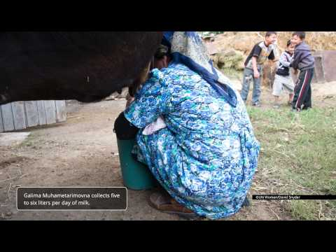 A Day in the Life of a Rural Woman Milk Collector (Kyrgyzstan) UNWOMEN (EN)