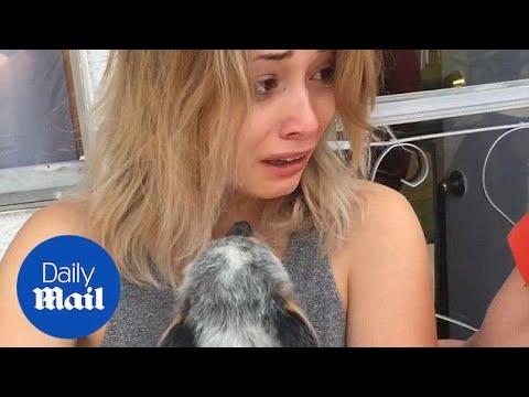 'World's best boyfriend' surprises girlfriend with puppy - Daily Mail
