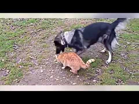 funny cartoon videos|Funny Dogs Videos |Youtube Video Funny