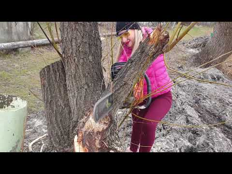 awesome-video!-pretty-girl-chainsaw-top-big-tree-cutting-down-extreme-felling-wedge-fastest-skill