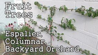 Urban Gardening: Fruit Trees -espaliers, Columnars & Backyard Orchard