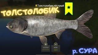 Русская рыбалка 4 РР4 р Сура Толстолобик