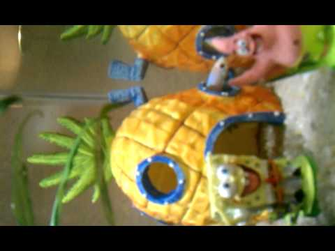 Betta Fish Sleeping In Sponge Bob Pineapple House Youtube
